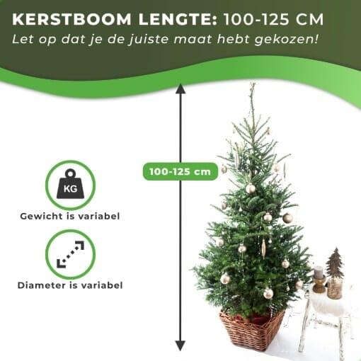 Fraseri kersboom met kluit kopen 100-125