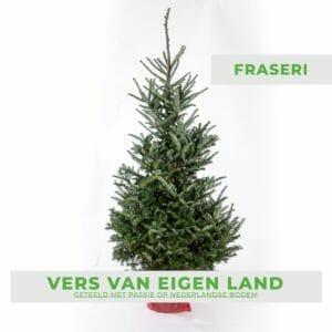 Fraseri kerstboom kopen