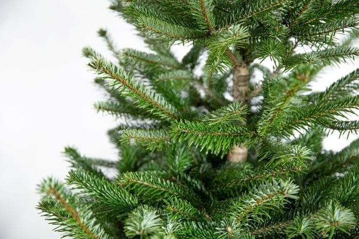 Kerstboom kopen Rotterdam