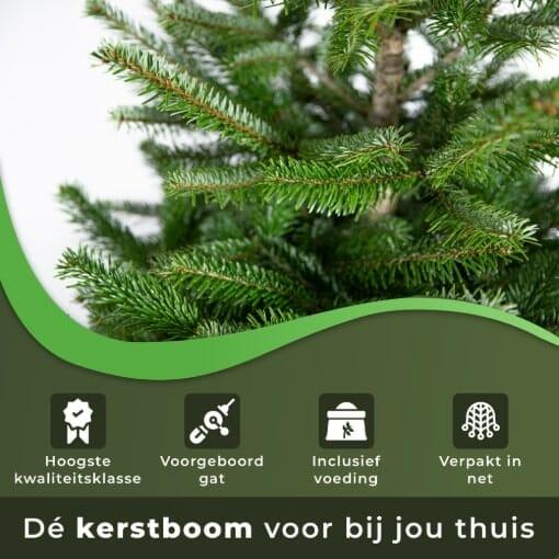 Kerstboom voor bij jou thuis