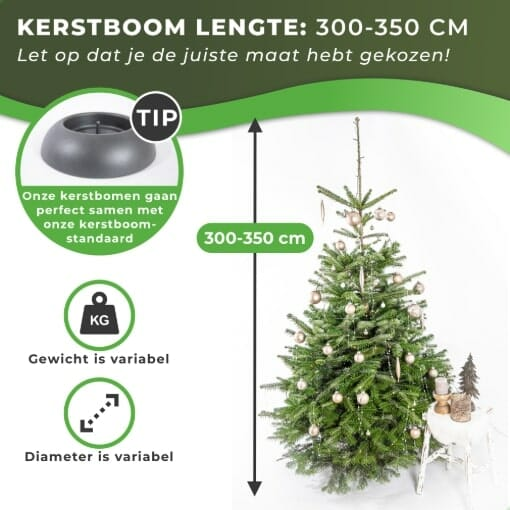 Nordmann kersboom kopen 300-350