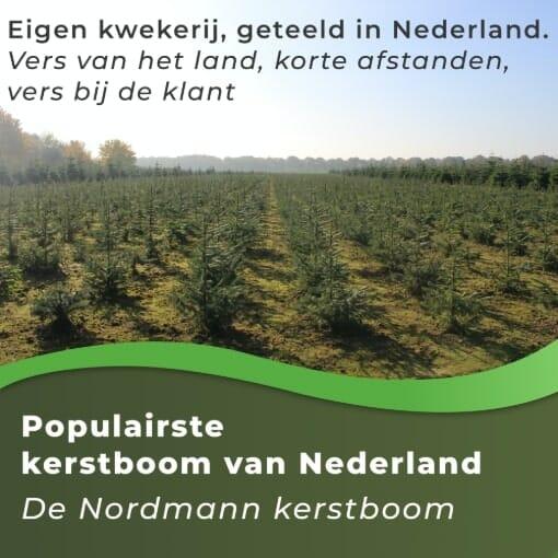 Nordmann kerstboom vers van het land