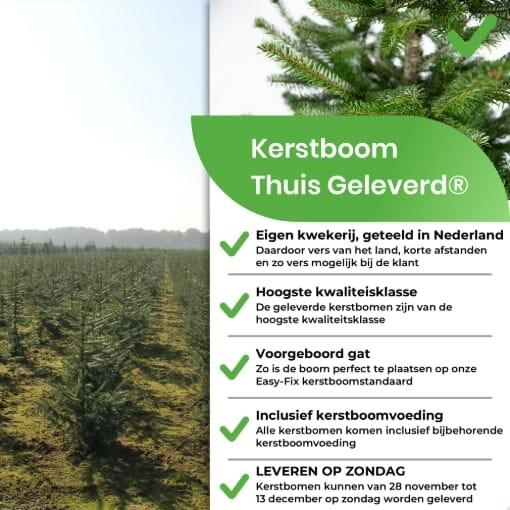 Voordelen Nordmann kerstboom