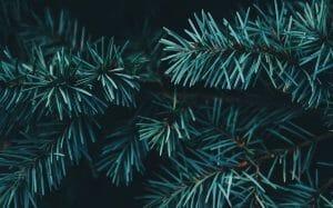 kerstboom met of zonder kluit